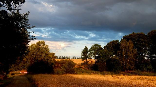Golden landscape // Goldene Landschaft (Explore)