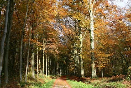 boisdhavré sentierforrestier sentierforestier belgiqueenimage arbre automne nature saisons belgique jpghavré havrébelgique