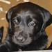 Andreas x March litter, 5.20.14