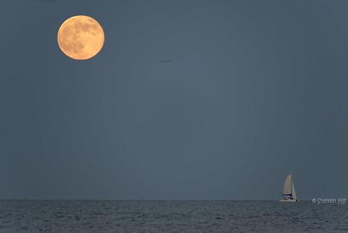 moon texas super seabrook duper yellowmoon harriscounty nikond800 clearlakeyachtclub capturenx2 nikongp1 supermoon2014 moonriseatgalvestonbay supermoonriseonclearlake moonriseongalvestonbay supermoononhorizon moonlightsailingyacht supermoonrise2014 sigma150500mmf563apoos