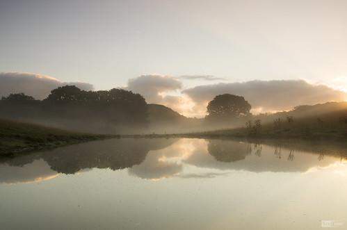 morning trees mist reflection water fog wales sunrise reflections pond farm calm farmland mild cilcain
