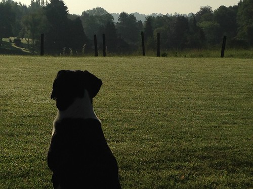 Dog watches | by William Parsons Pilgrim
