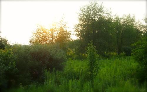 trees blur green forest sunrise woods edge