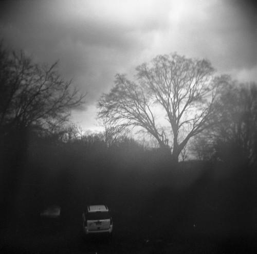 trees winter blackandwhite 120 silhouette mediumformat holga iso400 hp5