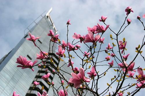 Wall Centre Blossoms   by mezzoblue