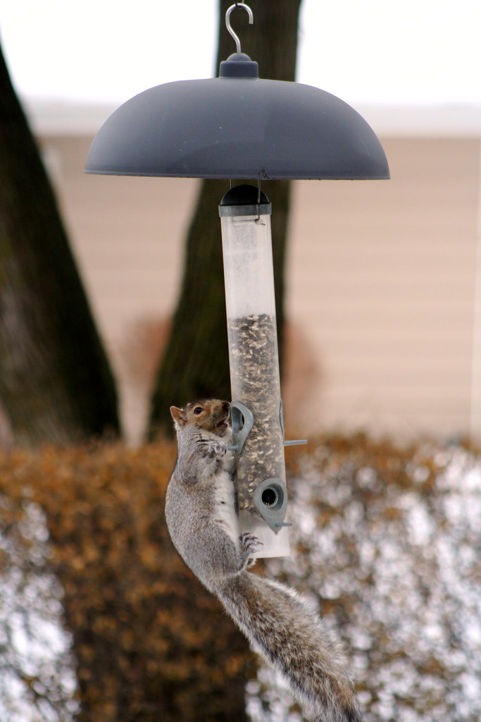 Image result for Squirrel Proof Bird Feeder flickr