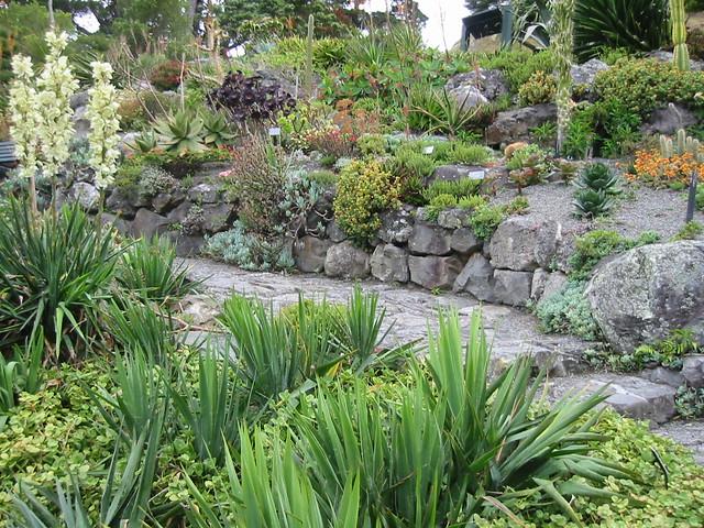 Succulent Rock Garden Succulent Garden Wellington Botanic Flickr