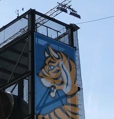 big IFFR tiger