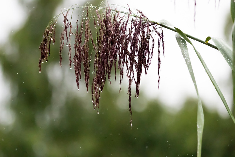 wet / nass