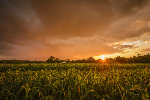 sunset orange sun ontario canada green nature field landscape corn farm wideangle lush niagararegion ultrawidelens nikond600 northpelham