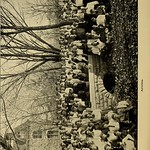 "Image from page 113 of ""The Orange blossom"" (1906)"