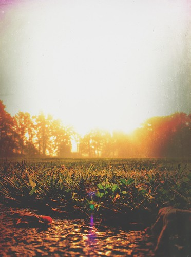iphoneedit snapseed field 2014 sunrise gold sun grass mist skies trees fog light glow peaceful dslr mextures handyphoto sky jamiesmed autostitch tree geotagged geotag facebook landscape summer september rural ohio midwest canon eos t1i rebel photography clintoncounty smalltown usa country park