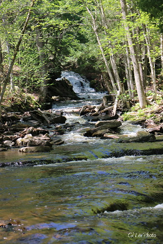 camping forest river rivière chute forêt bois