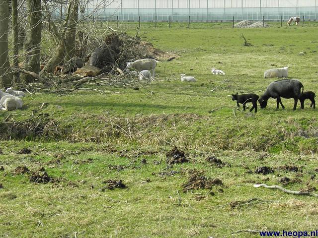 24-03-2012 rs'80 Bleiswijk 25 Km  (85)