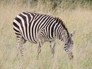 Nairobi National Park 5