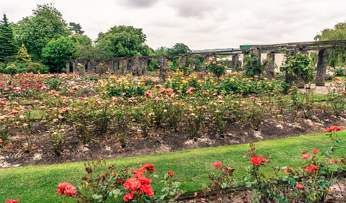 THE ROSE GARDEN WITHIN BELFAST BOTANIC GARDENS Ref-766 | by infomatique
