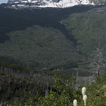 Beargrass with Heavens Peak