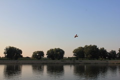ドラーヴァ川