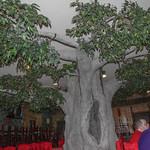 A Tree inside a Restaurant