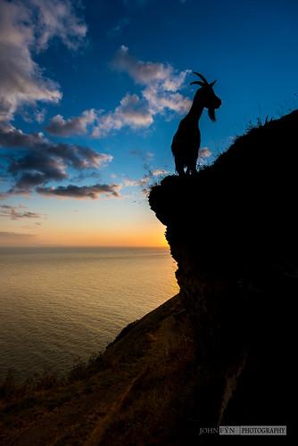 ocean uk blue sea england sky orange sun water animal animals silhouette clouds standing sunrise mammal europe quiet unitedkingdom peaceful goat calm cliffs devon serenity mammals valleyofrocks lynton