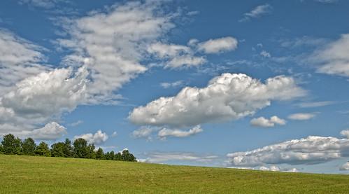 trees sky field clouds meadow