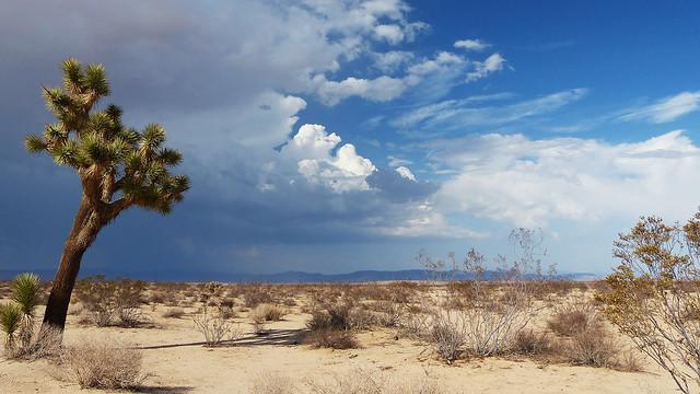 JOSHUA TREE AND CLOUDS, CALIFORNIA DESERT—FZ200