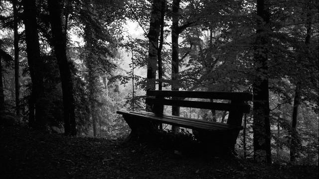 Schwarzwald after a rain