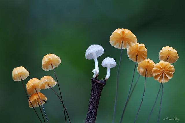 Miniature umbrellas