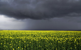 Storm over the Field | by Neillwphoto