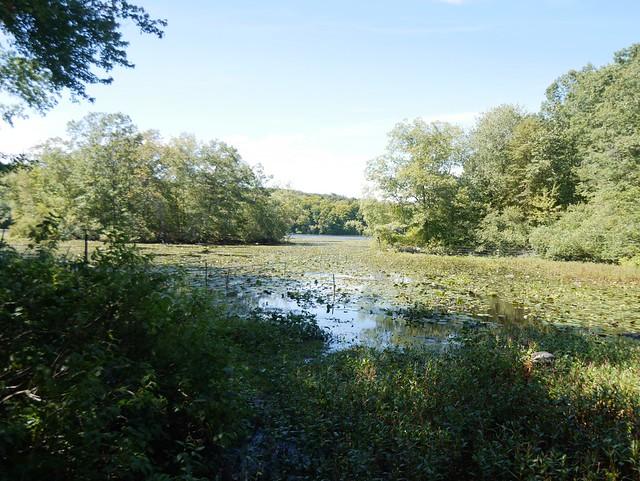 日, 2014-09-14 13:50 - Teatown Lake Reservation