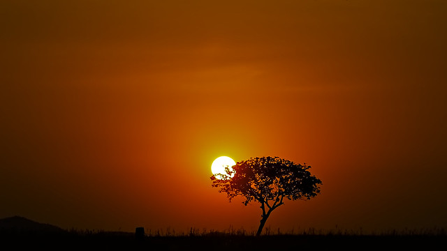 The Tree and The Sun