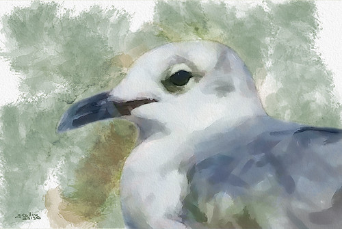 Seagull Closeup | by Greg Collins Fine Art