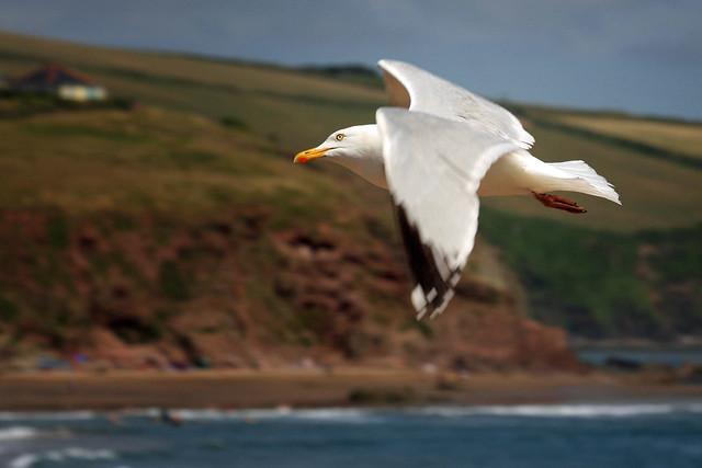 Flight to Burgh Island via Bigbury-On-Sea