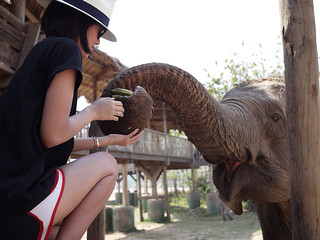 Elephant Nature Park Chiang Mai-9 | by shalai6