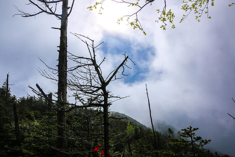 2014-06-29_00140_天狗岳.jpg