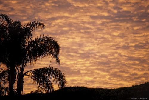 socal southerncalifornia sanjuancapistrano sunrise morning morninglight goodmorning coraltree palmtree palm palmfronds california clouds ca cloudsstormssunsetssunrises cloudsorangecounty cloudy firey inferno goldenstate glow berm hill silhouette silhouettes wintermorning wintersky winter