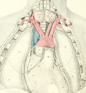 """Image from page 15 of """"Plates of the arteries of the human body"""" (1835)   by Internet Archive Book Images"""