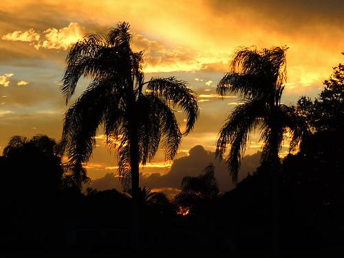 pink blue trees sunset red wallpaper sky orange sun color weather silhouette yellow night clouds palms landscape evening nikon flickr florida dusk sunsets coolpix sunrises storms bradenton p510 mullhaupt cloudsstormssunsetssunrises jimmullhaupt