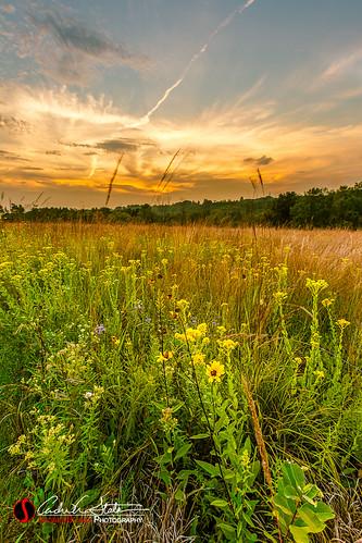sunset orange flower green nature field yellow wisconsin clouds forest canon landscape weeds unitedstates trail waukesha wildflowers prairie wi naturetrail landscapephotography retzernaturecenter discoverwisconsin travelwisconsin 5dmarkiii