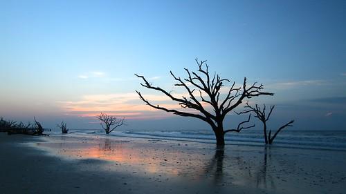 sunrisedaybreakbotanybaysouth carolinaoceanseatreesoaksshorelinewavessunrisedaybreaksandssurfsillhoettes