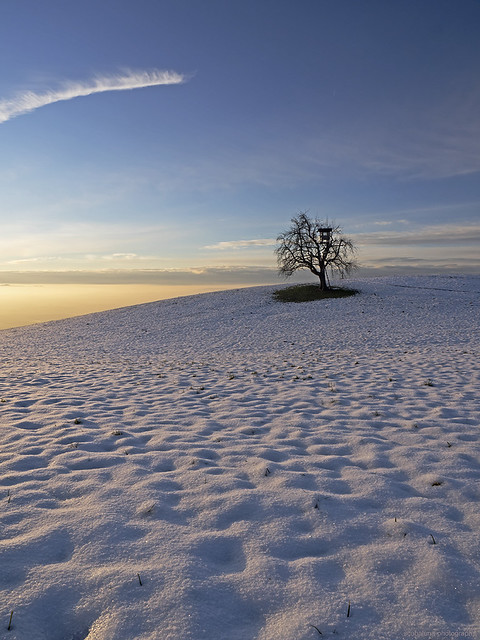 solitary / die Baumhütte am Rande der Welt