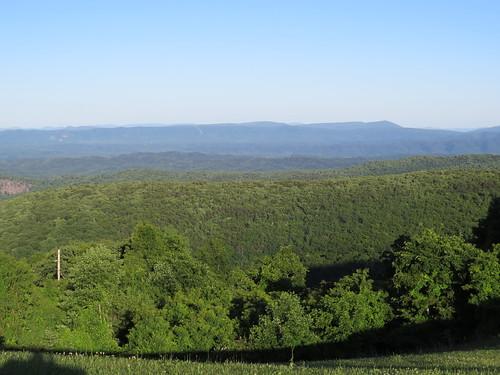 trees mountains