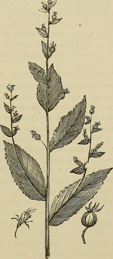 Image From Page 288 Of Materia Medica And Therapeutics Flickr
