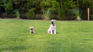 Bailey & Pepper [Brenizer] | by jasonwithers