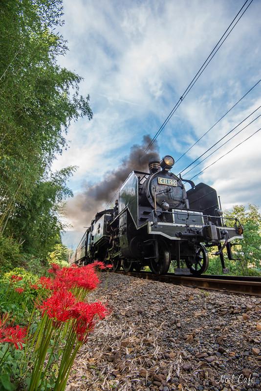 彼岸花とSL - Red Spider Lily & Steam Locomotive by Noël Café
