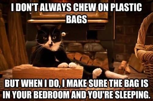 Plastic Bag Cat....