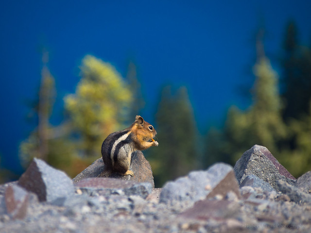 A Quick Snack at Crater Lake
