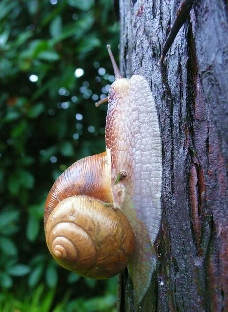 Shanghai - Snail