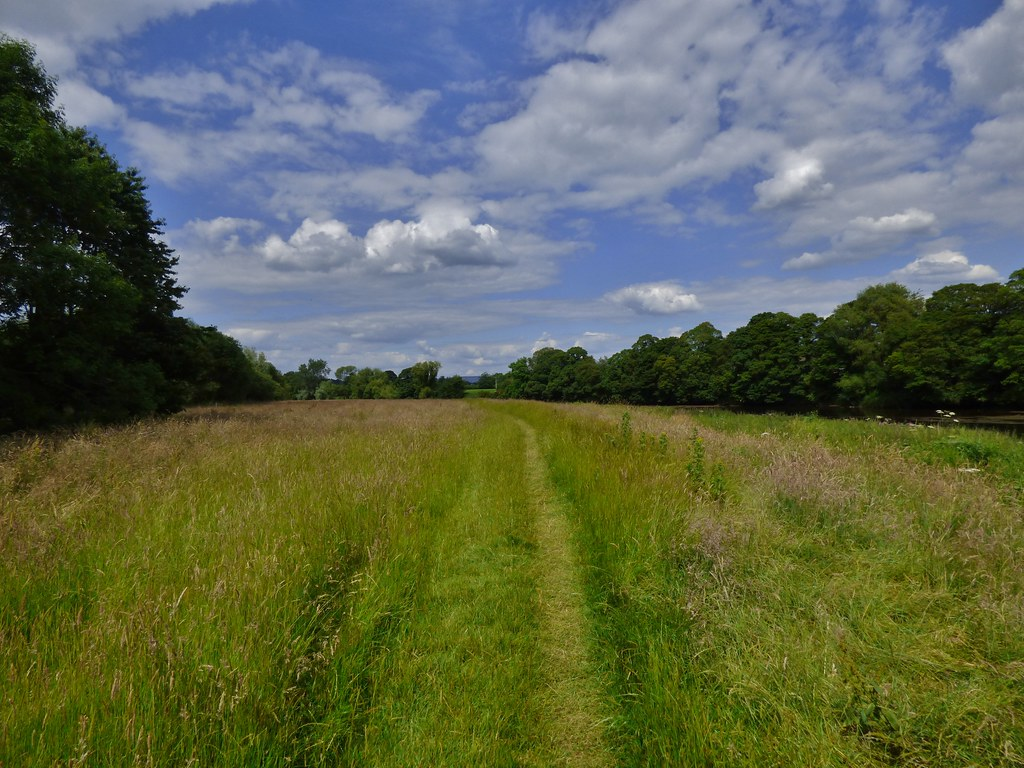 Brockholes Nature Reserve near Preston, Lancashire, England - June 2014