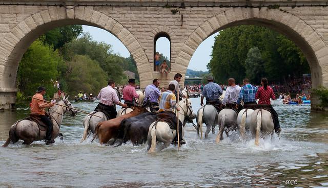 Une gaze désigne un endroit pouvant être franchi à gué.....Les chevaux entrent les premiers dans le Vidourle et vont rester dans l'eau en attendant les taureaux Les gardians des manades montrent toute leur agilité lors du passage sous les arches du pont,